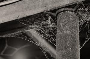cobwebs-300x198